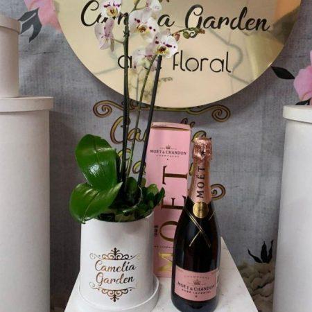 Orquidea y Champagne