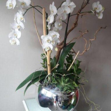 3 Orquídeas Dobles Blancas
