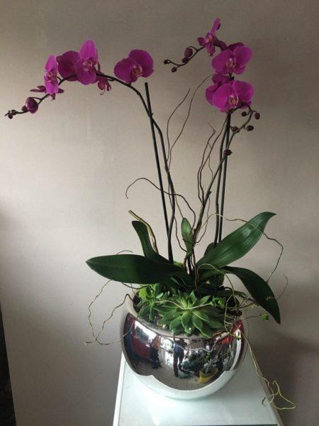 Orquídeas Moradas en Base Espejo