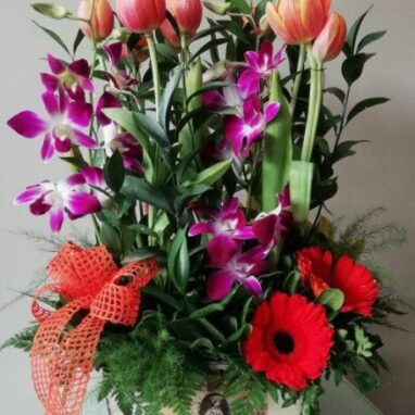 Tulipanes y Orquídeas