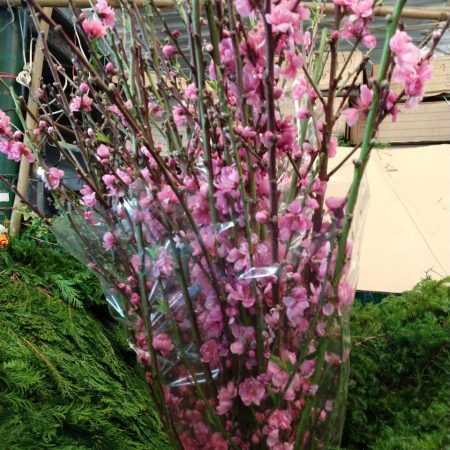 Flor de Durazno Paquete