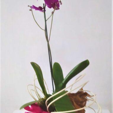 Orquidea de 1 tallo