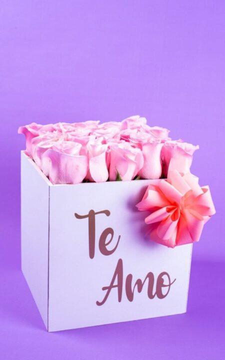 Caja con 24 Rosas Rosas