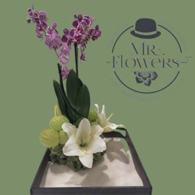 Arreglo Floral con Orquídea Mini