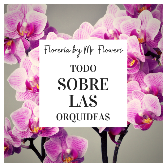 Todo sobre las orquídeas